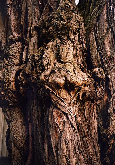 ispirazione-sculture-nell-albero
